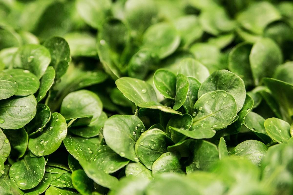 salad-264826_1280
